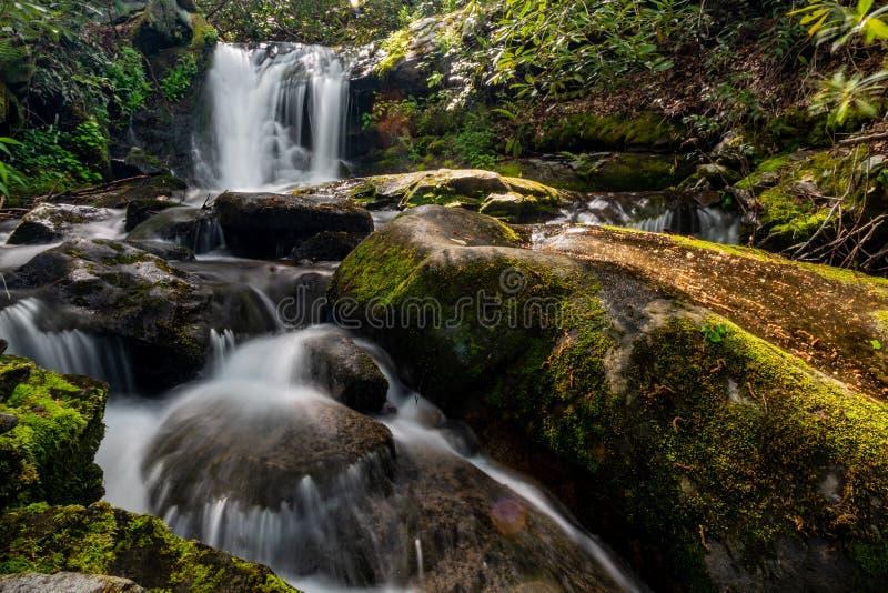 Husky Branch Falls In Spring stock foto