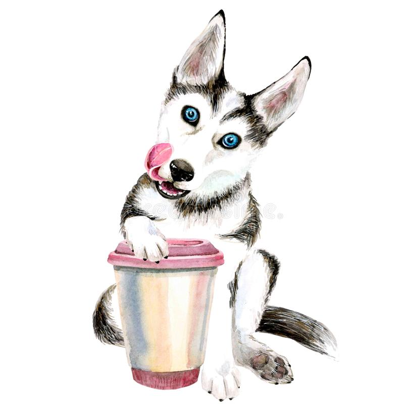 The Husky dog drinks coffee from a pink glass. cute puppy. Isolated royalty free illustration