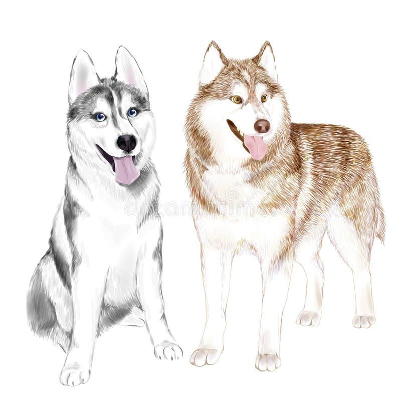 Husky Dogs Or Sibirsky Husky dogs royalty free stock image