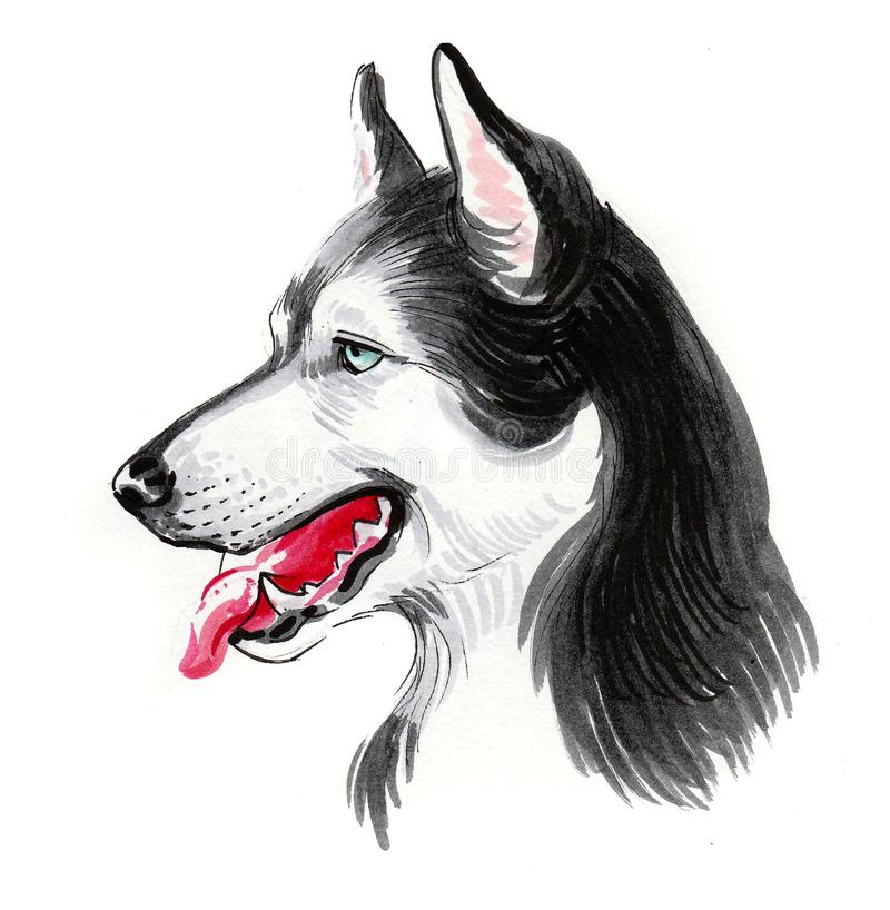 Husky huvud royaltyfri illustrationer