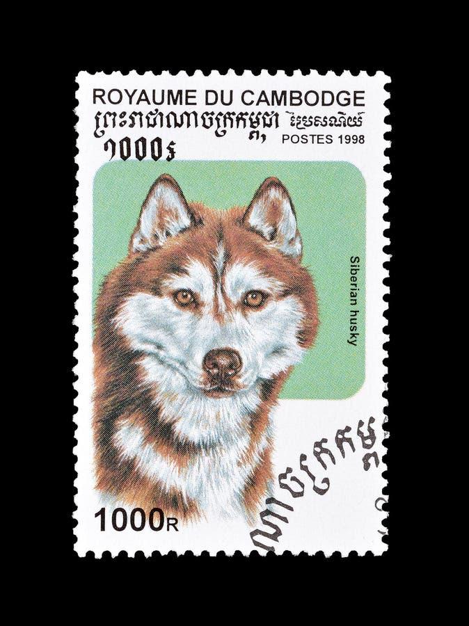 Husky pies na znaczku pocztowym fotografia stock
