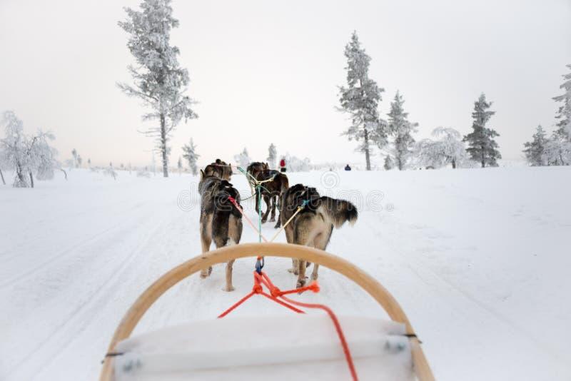 Husky psi sledding w Lapland Finlandia obraz stock