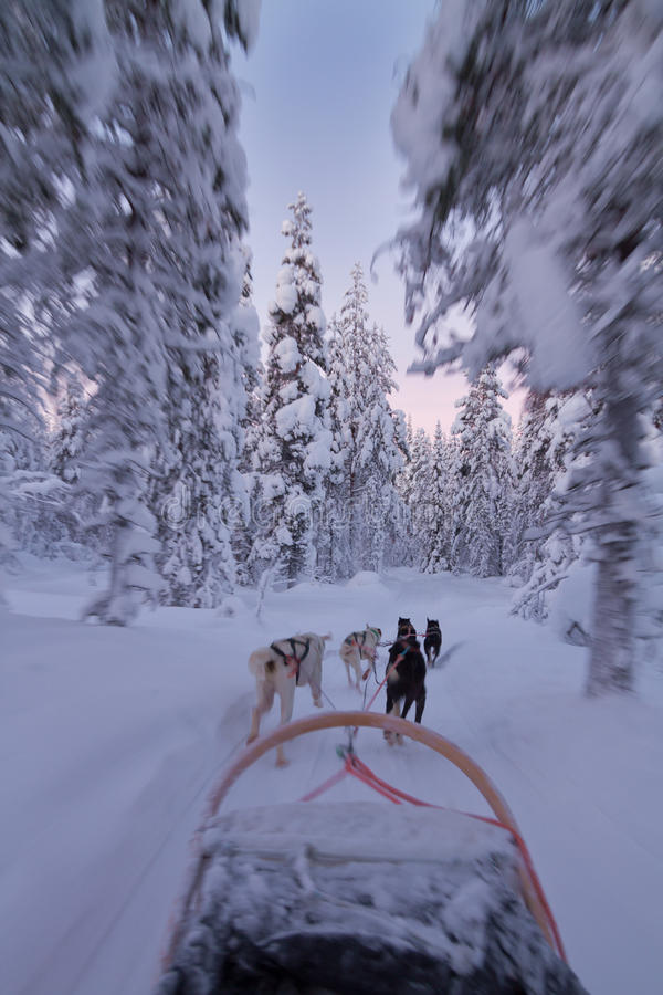 Husky ride at sunset royalty free stock photography