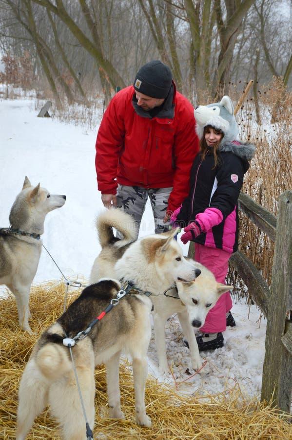 Husky siberiani della figlia e del padre immagine stock