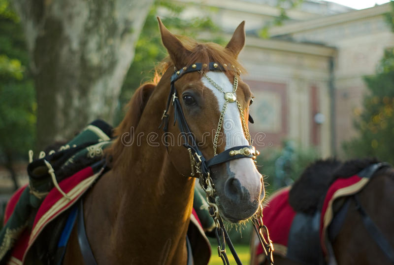 Hussar's horse. Horse with period saddlery and hussar dress on his back royalty free stock images