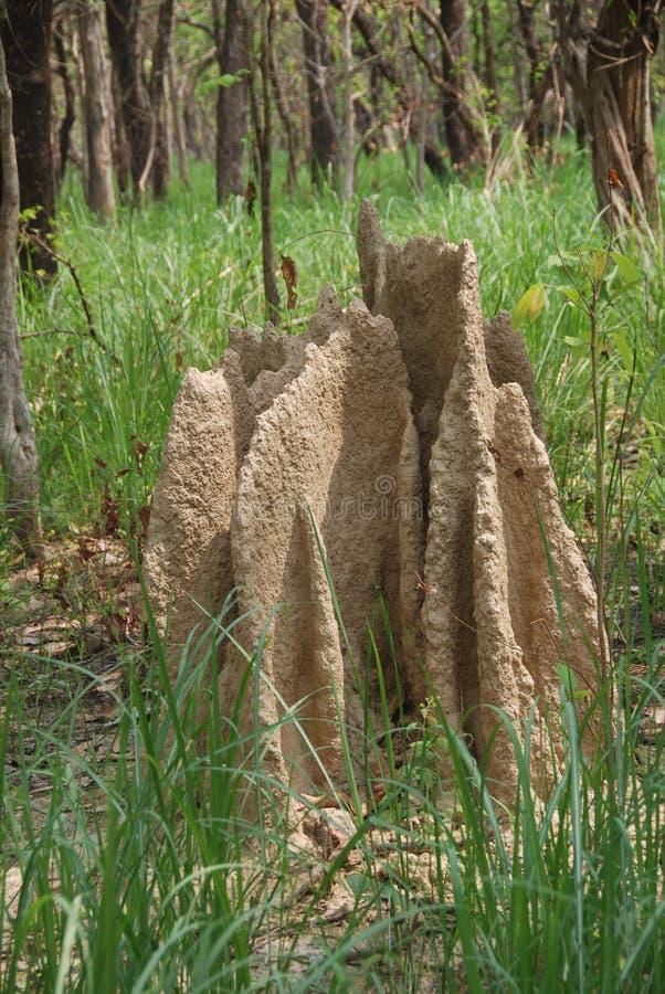 hustermites royaltyfri fotografi