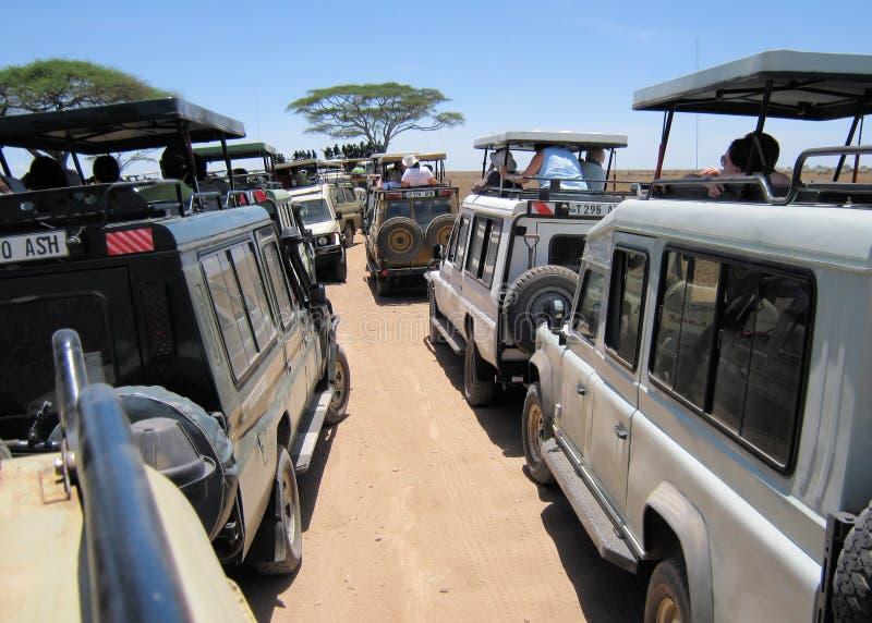 Hustle and bustle during game drive Serengeti. Hustle and bustle with safari vehicles during Game drive Serengeti National Park Tanzania Africa royalty free stock photography