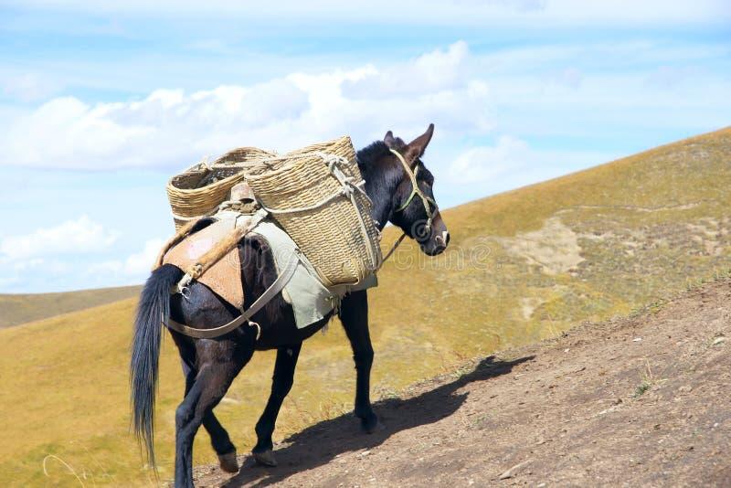 Download Husvagn fotografering för bildbyråer. Bild av hästar - 27278933