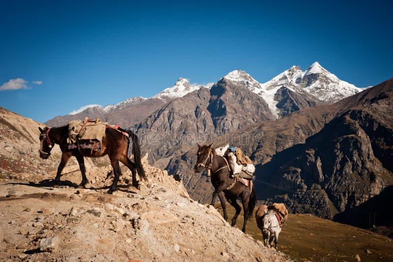 Husvagn av hästar