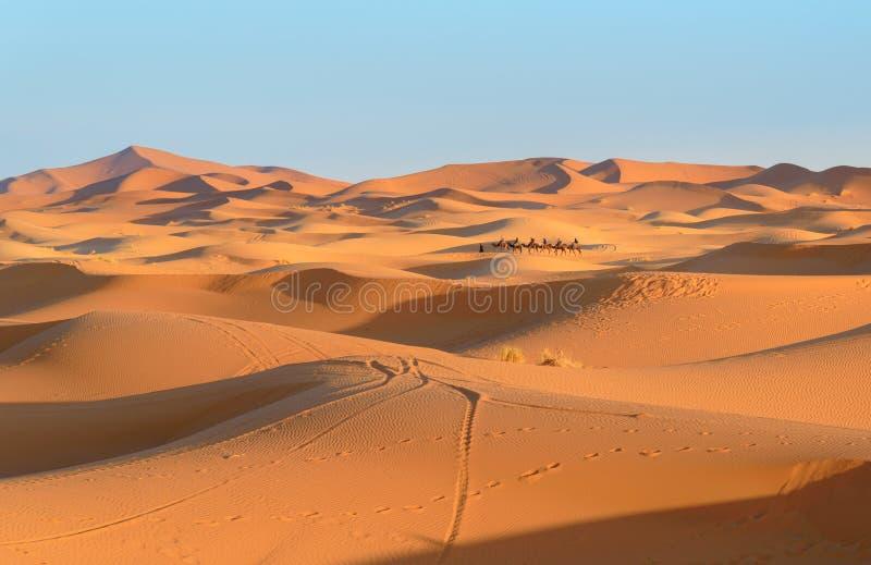 Husvagn av kamel i dyn för ergChebbi sand nära Merzouga, Marocko royaltyfri bild