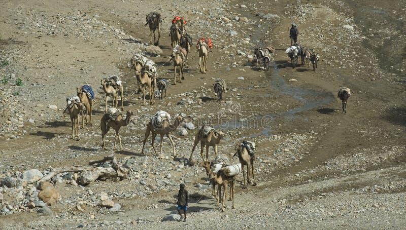 husvagn för 3 kamel royaltyfri fotografi