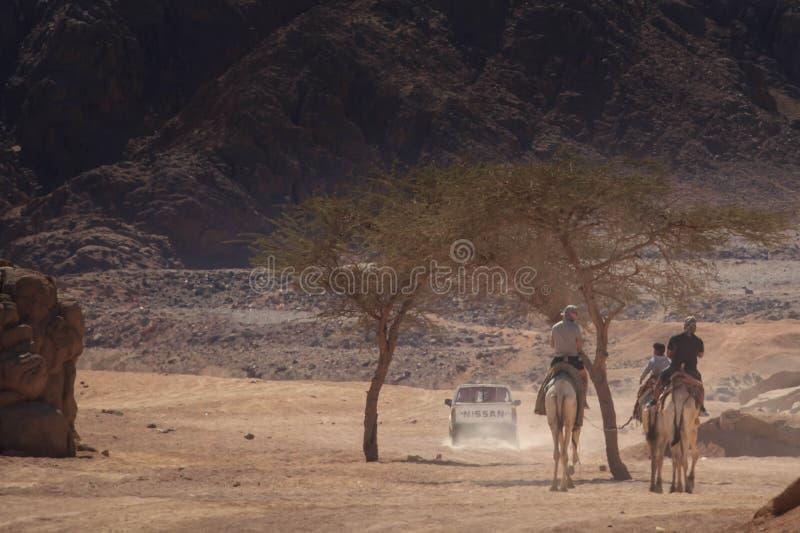 Husvagn som går till och med sanddyerna i de Sinai bergen, Egypten royaltyfri bild