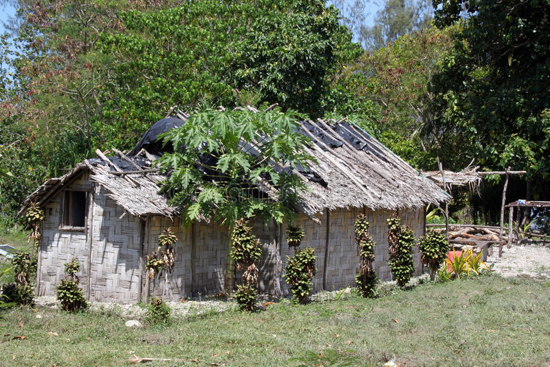 Hut. And papaya tree near the forest in Efate island, Vanuatu stock image