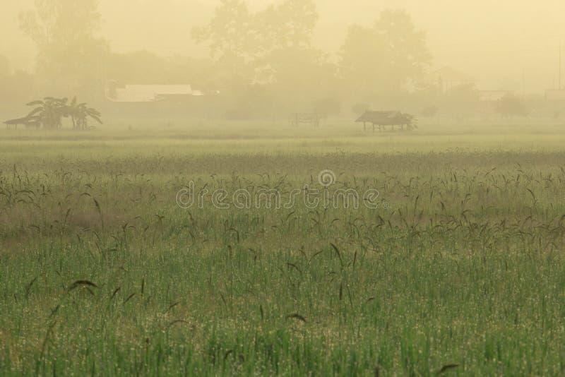 Hut bij het midden van padieveld royalty-vrije stock afbeelding