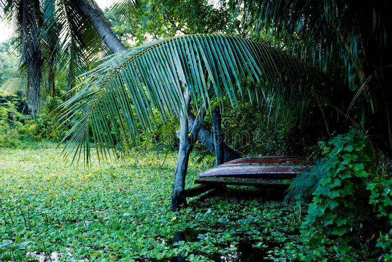 The Hut at farm Mahasarakham in Thailand. Tree royalty free stock photography