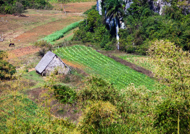 Hut in the field. Cuba. Vinales Valley royalty free stock photos