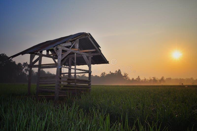 Hut in het groene padieveld bij avond met mooie hemelachtergrond stock foto