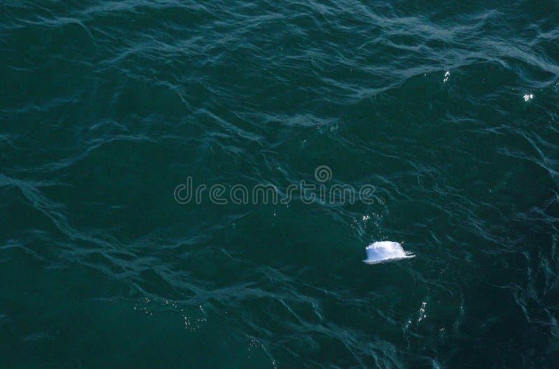 Hut im Meer lizenzfreies stockfoto