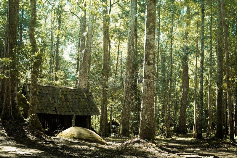 Hut in jungle stock photo