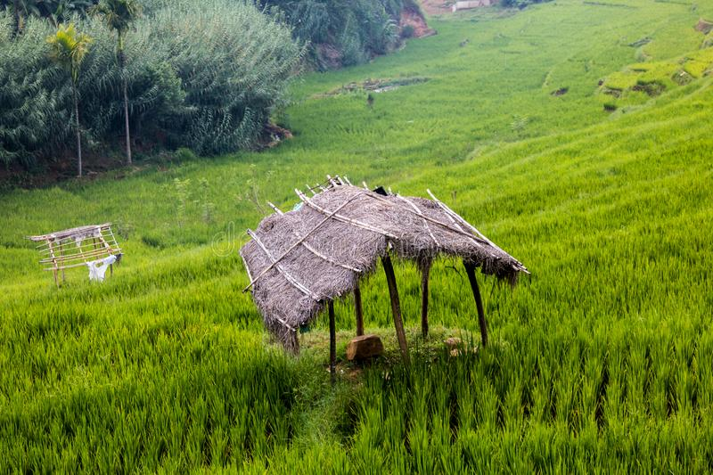 Hut in the paddy field royalty free stock photo