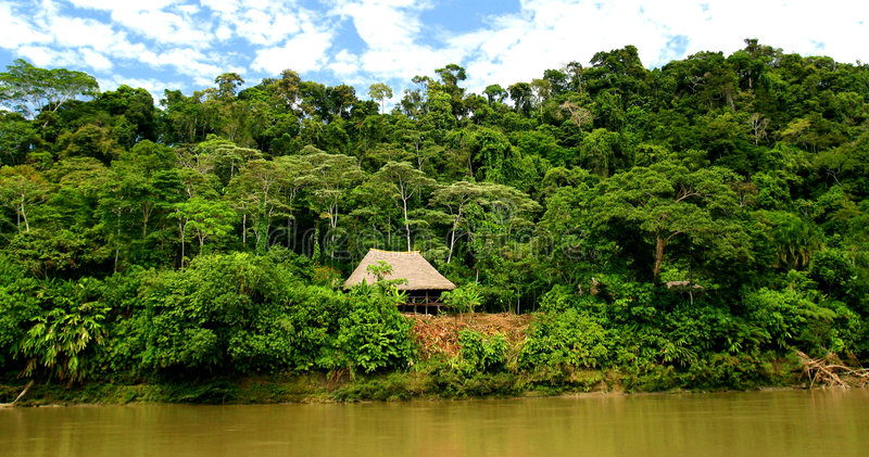 Hut In Rainforest royalty free stock photos