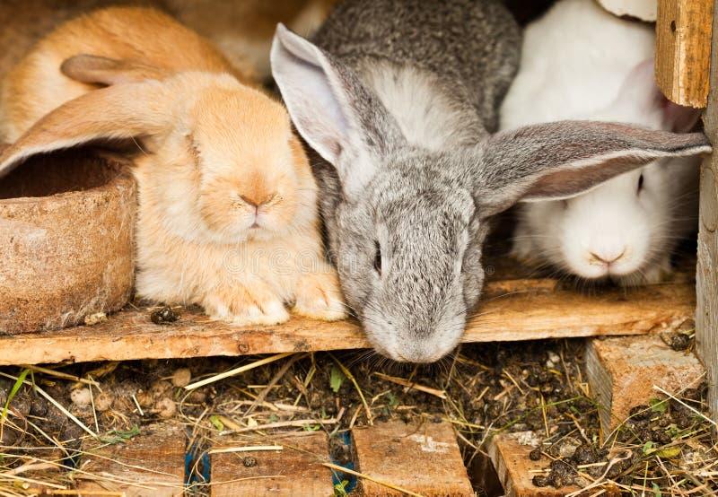hutch króliki zdjęcie stock