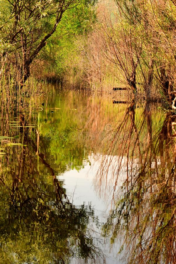 Hutovo Blato nature reserve, reflections in green water. Hutovo Blato is a nature reserve and bird reserve, located in south part of Bosnia and Herzegovina. It royalty free stock photo