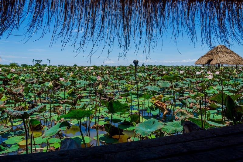 Hutte au lac de fleur de lotus image stock