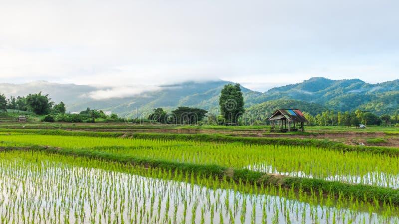 Hutte dans le domaine de ferme de riz photo stock