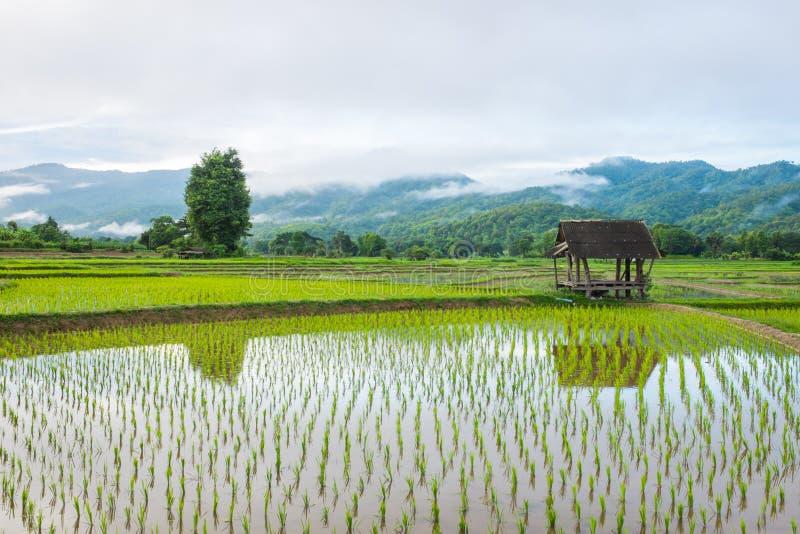 Hutte dans le domaine de ferme de riz image stock