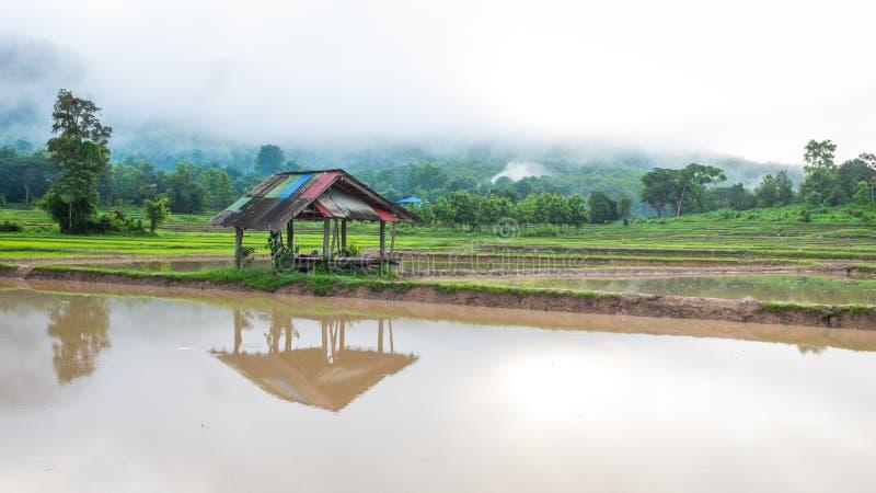 Hutte dans le domaine de ferme de riz photographie stock libre de droits