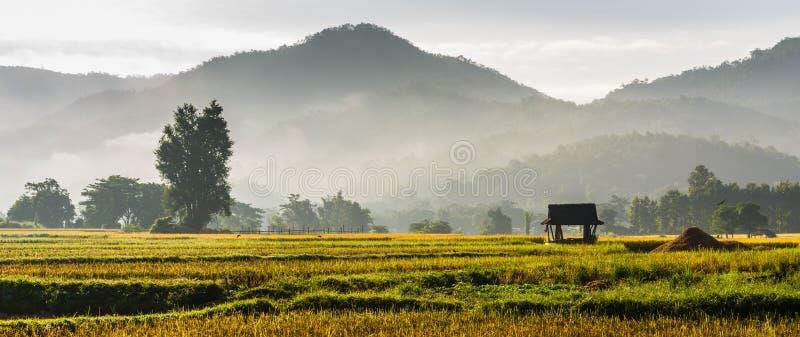 Hutte dans le domaine de riz photos stock
