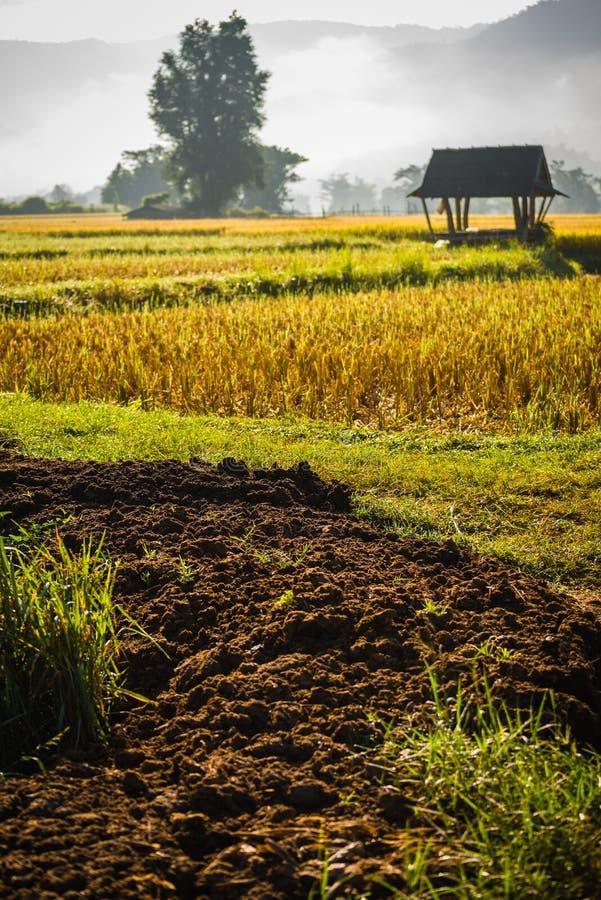 Hutte dans le domaine de riz photographie stock