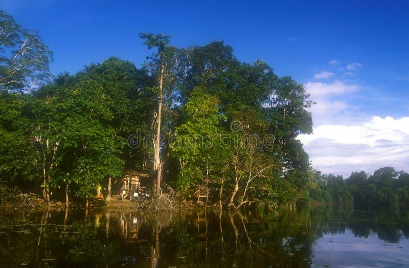 Hutte de jungle au Bornéo images libres de droits
