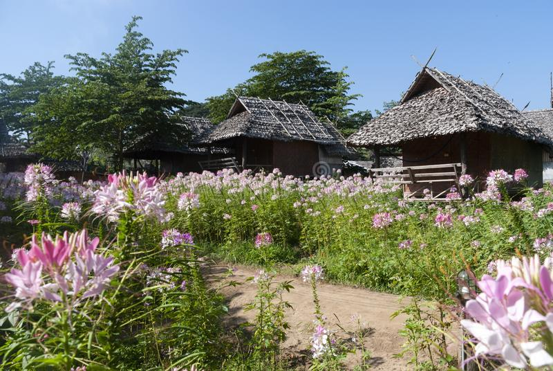 Hutte en bambou avec des fleurs en Tha?lande du nord images libres de droits