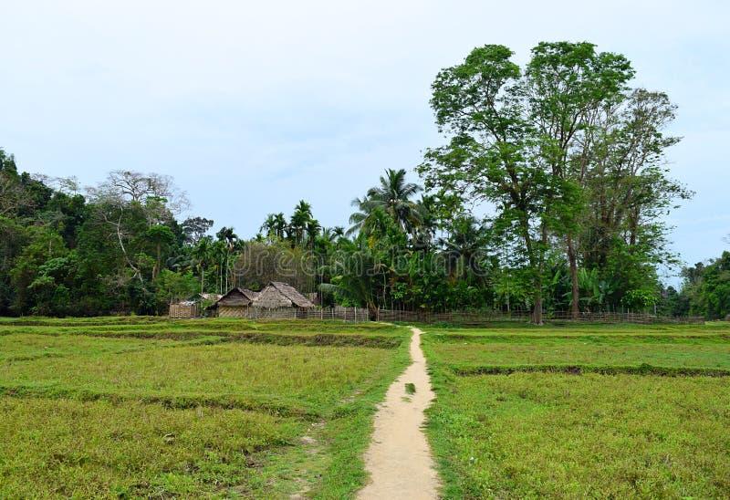Huttes tribales, voie par Paddy Field, arbres grands et ciel bleu - paysage à l'île de Baratang, Andaman Nicobar, Inde photos libres de droits