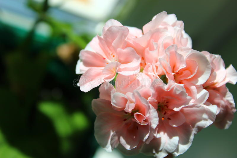 Huvud av blommor royaltyfria bilder