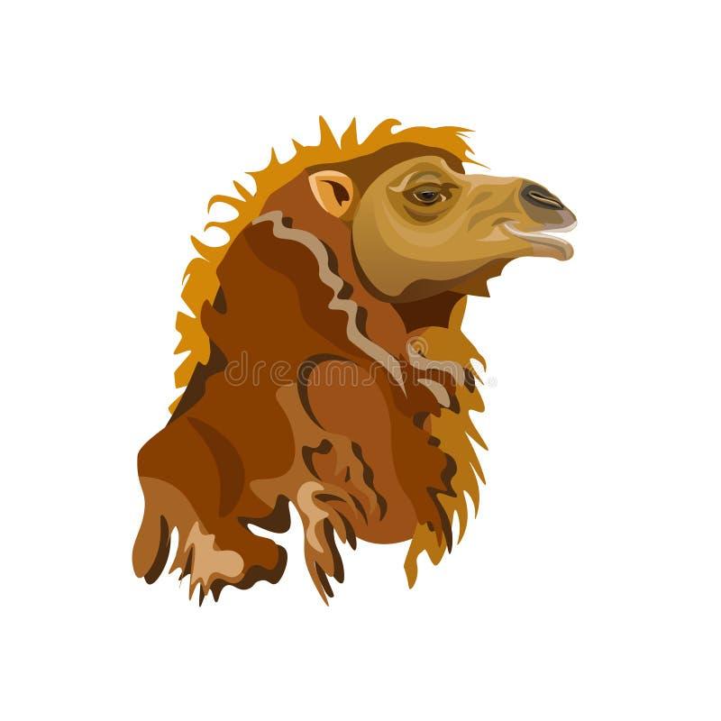 Huvud av en Bactrian kamel royaltyfri illustrationer