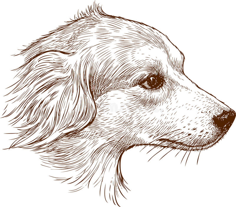 Huvud av en herdehund vektor illustrationer