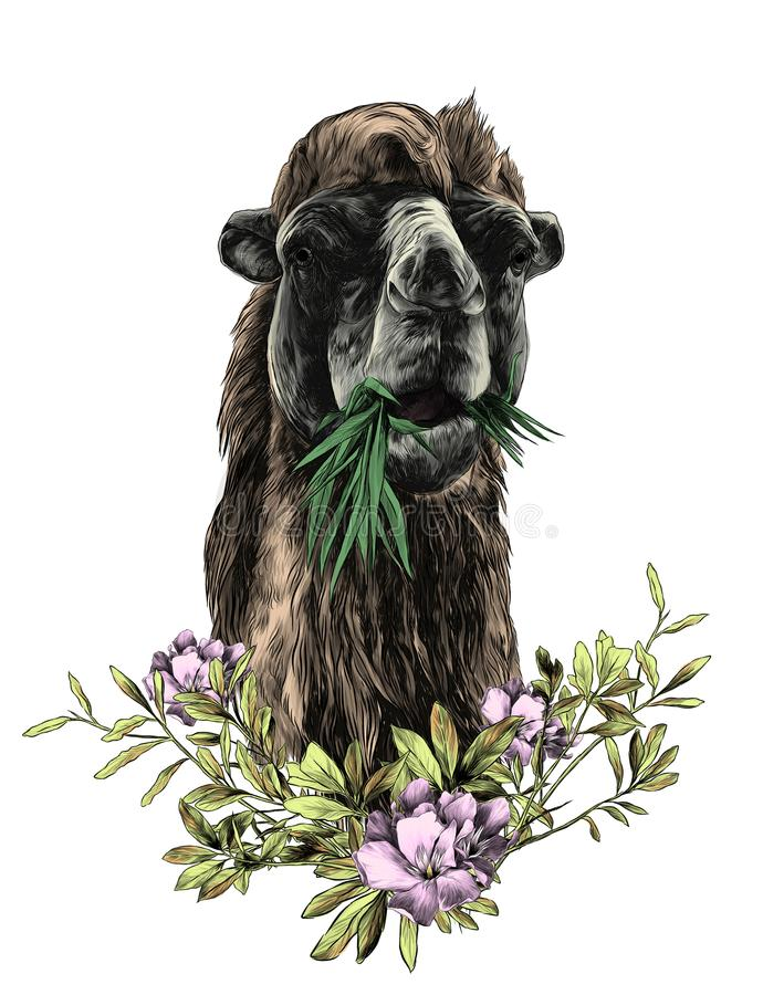 Huvud av en kamel vektor illustrationer