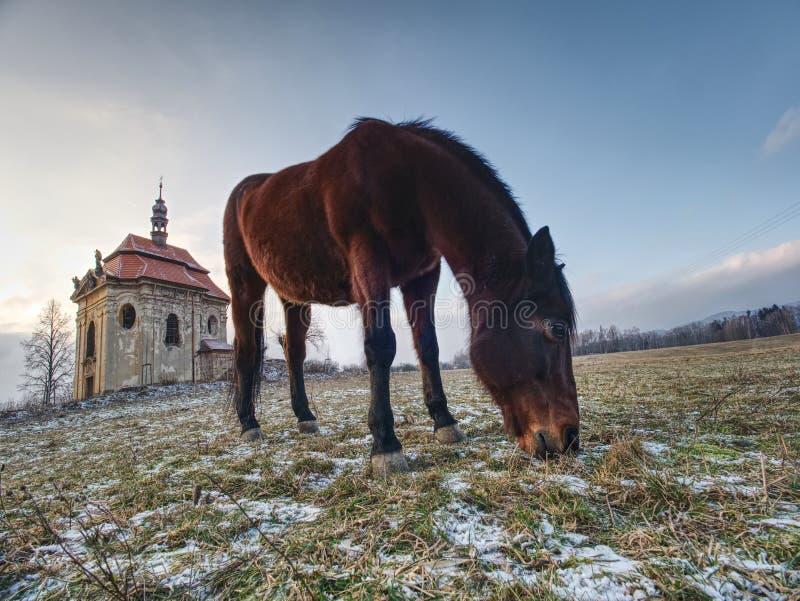 Huvud av hästen i detalj Slapp fokus royaltyfri foto