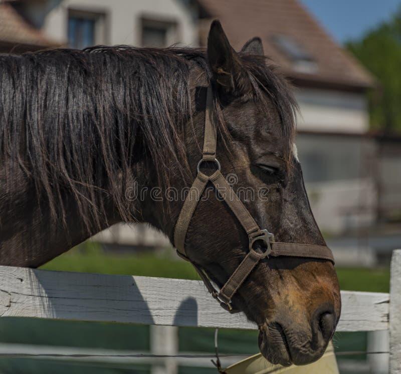 Huvud av hästen i solig dag för vår arkivbild