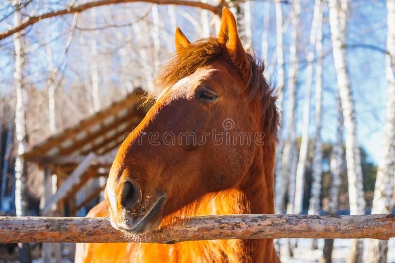 Huvud av hästen på en solig dag arkivfoto