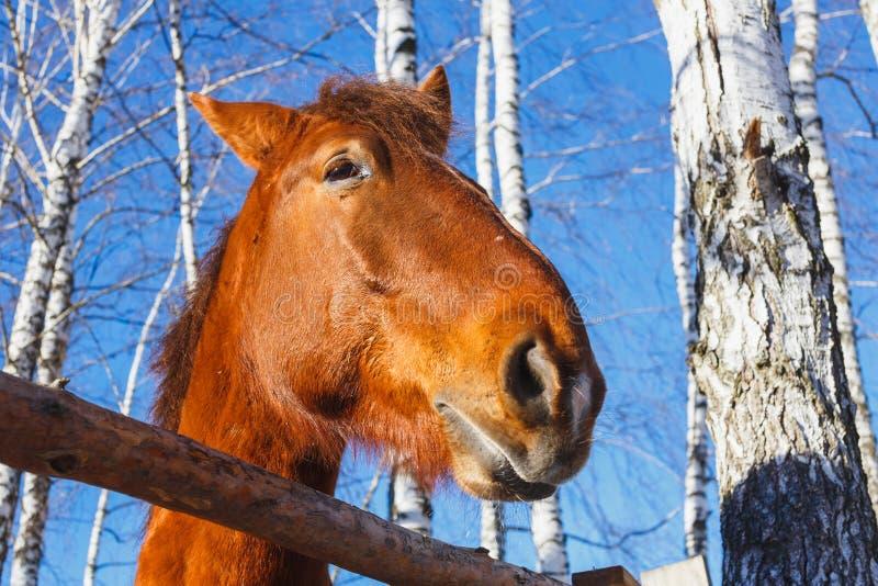 Huvud av hästen på en solig dag royaltyfria bilder