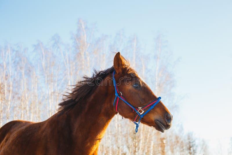 Huvud av hästen på en solig dag arkivbilder