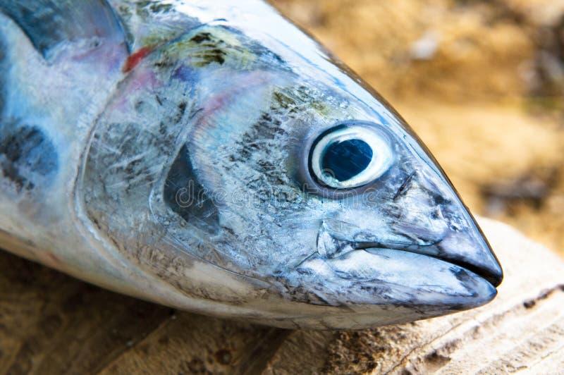 Huvud av tonfiskfisken arkivbilder