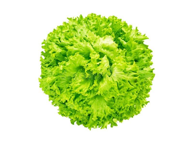 Huvud för Batavia grönsallatsallad arkivfoton