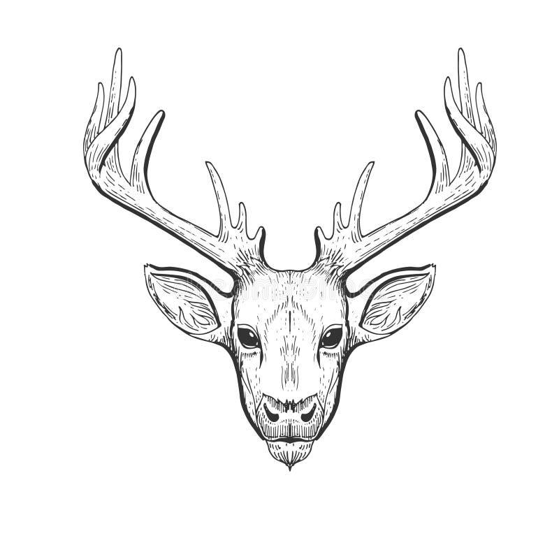Huvud för vektortappninghjortar i gravyr, scratchboardstil Utdragen illustration för hand med den isolerade djura ståenden royaltyfri illustrationer