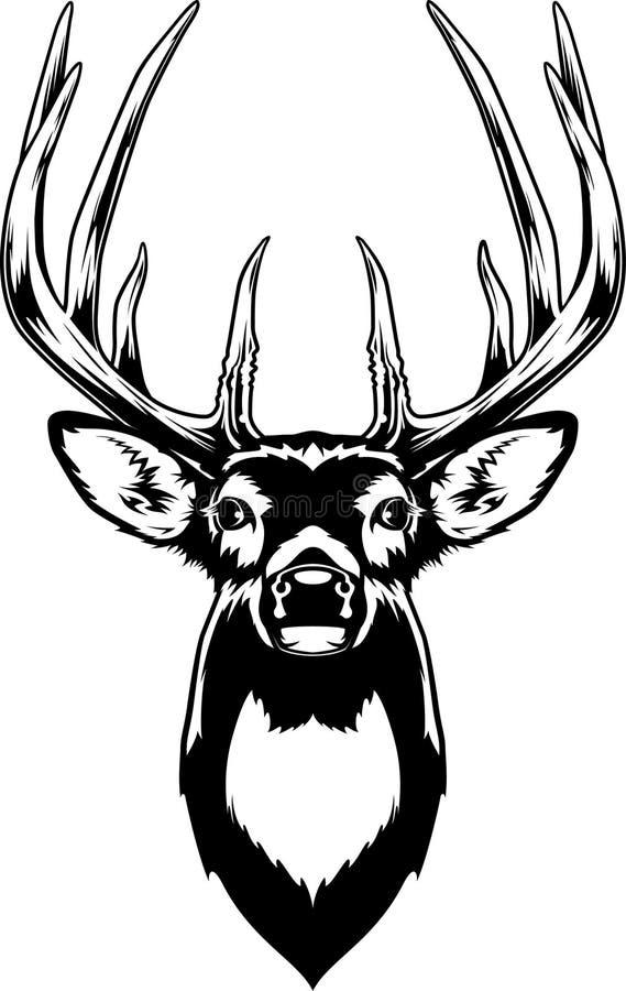 Huvud för Whitetailhjortar royaltyfri illustrationer