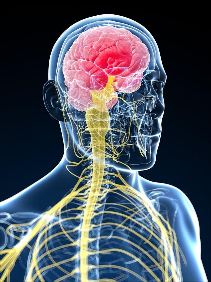Huvud - huvudvärk vektor illustrationer